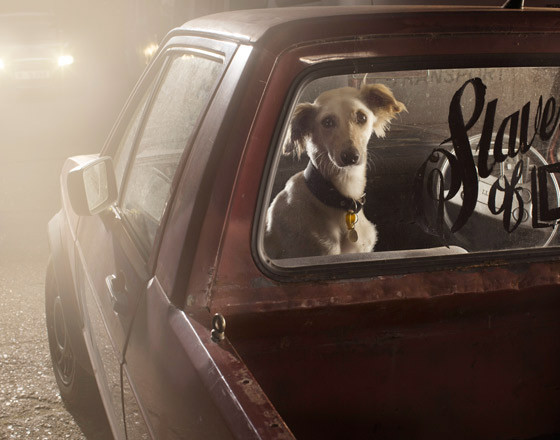 The silence of dogs in cars. Изображение № 4.