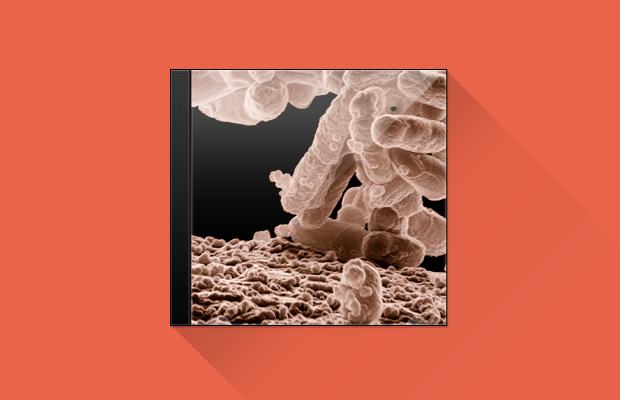 Как создаются бактериальный джаз и солнечное техно. Изображение № 11.