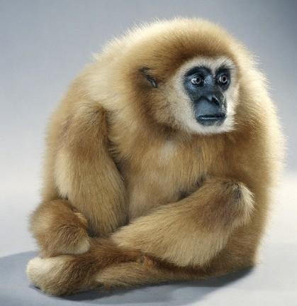 """Jill Greenberg """"Monkey portraits"""". Изображение № 27."""