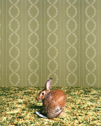 Животноводство отCatherine Ledner. Изображение № 22.