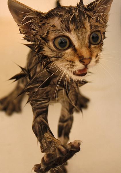 Блудливые коты. Изображение № 21.