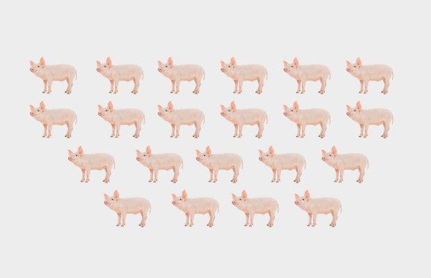 Головоломка на выходные: свиньи взагоне. Изображение № 2.