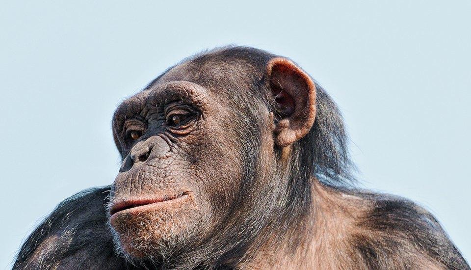 Как животные помогают понять характер человека. Изображение № 3.