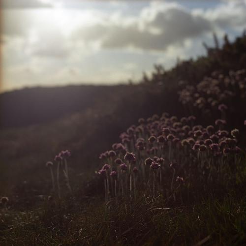 Цветы жизни ивересковые пустоши. Изображение № 13.