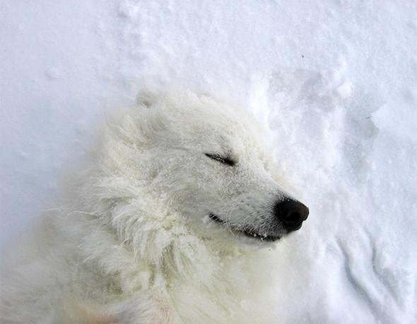 Изображение 9. Журнал Wired составил топ арктических фотографий.. Изображение № 9.