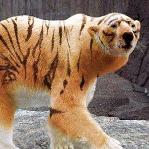 Тест: отличите  настоящее животное  от вымышленного. Изображение № 19.