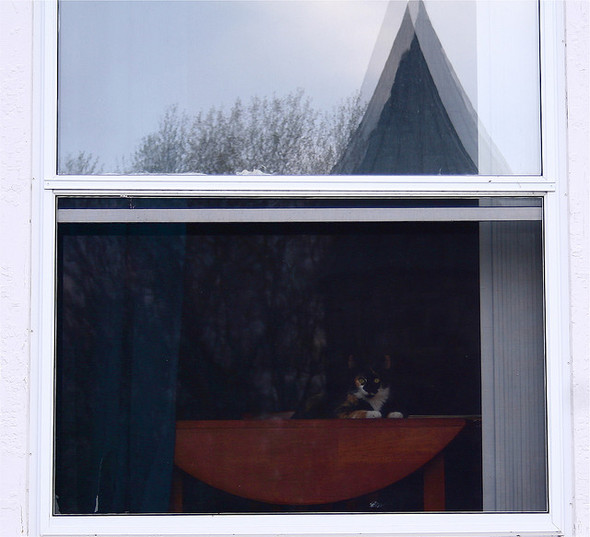 Cat. Window. Изображение № 34.