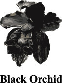 Лукбук: Джинсы Black Ochid Fall 2011. Изображение № 17.