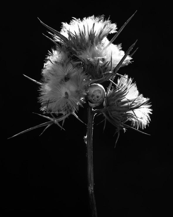 Изображение 25. Альберт Уотсон - шотландский фотограф, покоривший мир.. Изображение № 25.