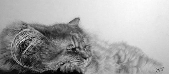 Кошки, люди, карандаш. Paul Lung. Изображение № 11.