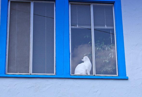 Cat. Window. Изображение № 29.