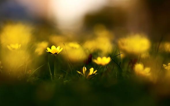 Весна идет! Создаем весеннее настроение. Изображение № 15.