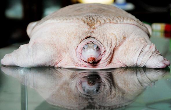 Животные-альбиносы. Изображение № 1.
