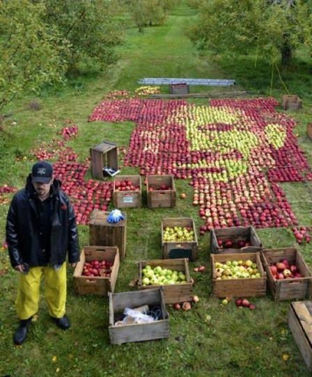 Канадский художник выложил портрет Стива Джобса из яблок. Изображение № 2.