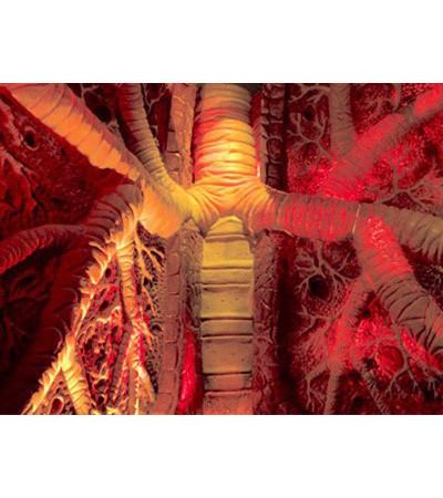 В поисках «Немо»: Гид по мировым музеям науки. Изображение № 128.