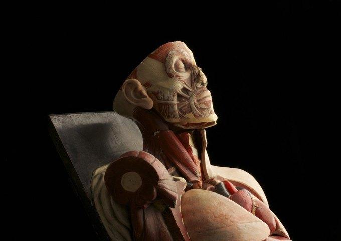 Старая анатомическая модель. Изображение № 16.