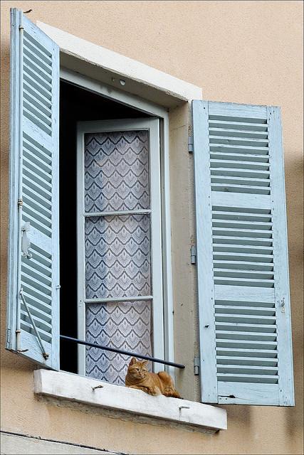 Cat. Window. Изображение № 45.