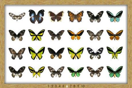 8 приложений  для наблюдения  за природой . Изображение № 53.