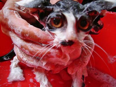 50 животных, которые ненавидят мыться. Изображение № 5.