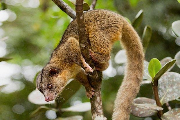 Как учёные находят новых животных: 10 недавно открытых видов. Изображение № 6.