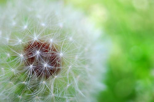 Лёгкость Yoshiko. Изображение № 25.