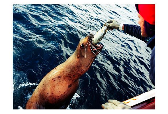 Фото-рыбалка Кори Арнольда. Изображение № 24.