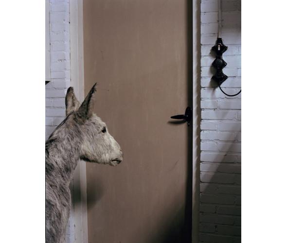 Фотограф: Даниэль ван Арк. Изображение № 10.