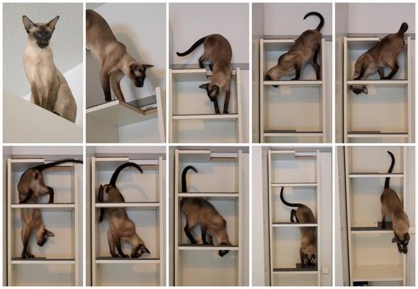 IKEA - интерьер для котов. Изображение № 6.