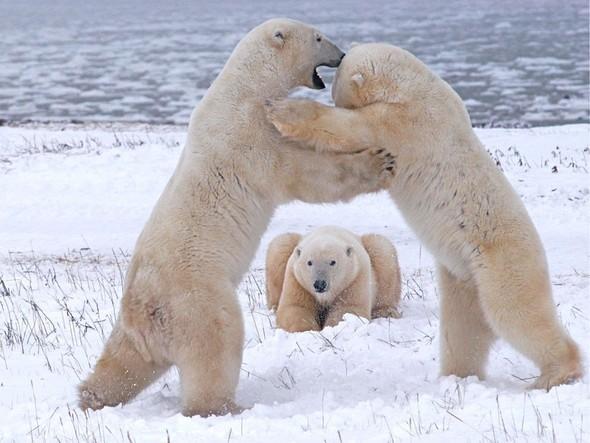 Лучшие снимки от National Geographic (золотой фонд). Изображение № 29.