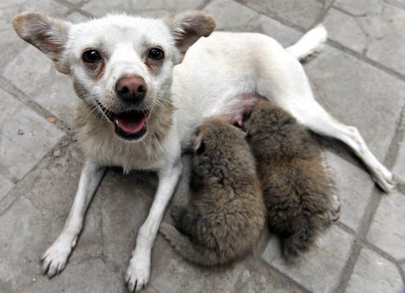 Дружба - она и у животных дружба!. Изображение № 2.