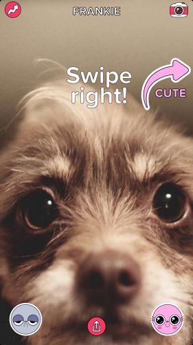 Buzzfeed выпустил Tinder для животных . Изображение № 1.