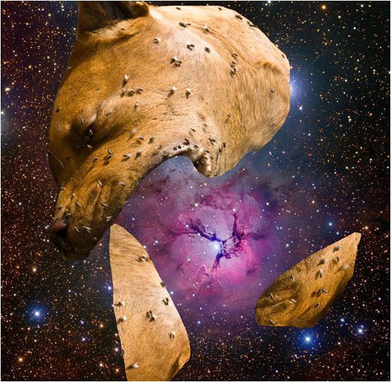 Белок на обочинах сверхновых. Изображение № 10.
