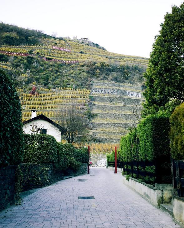Горный виноград Nebbiolo. Изображение № 1.