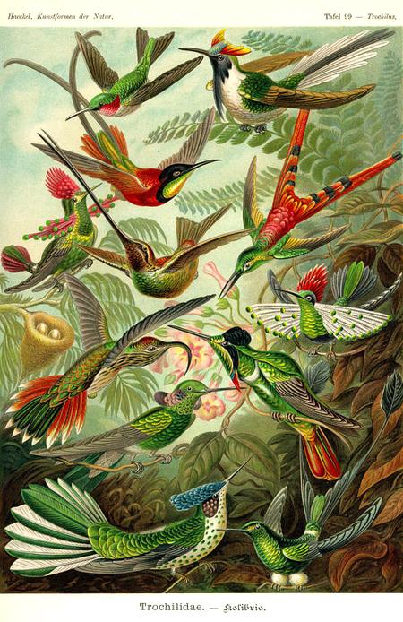 Причудливые формы природы. Изображение № 48.
