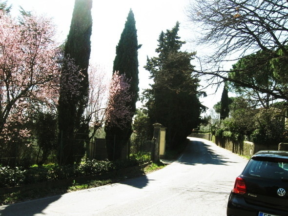Изображение 29. Тосканское масло.. Изображение № 21.