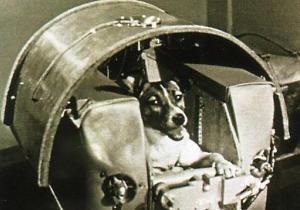 Собачий космос. Изображение № 3.