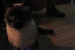Как сделать фотобудку  для кота. Изображение № 22.