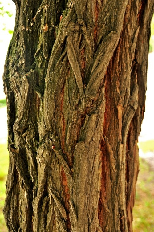 Treefilia. Изображение № 15.
