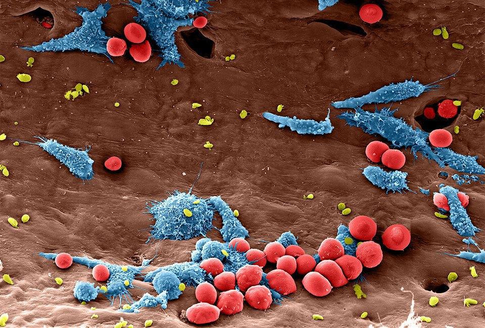 10 ответов  на важные вопросы  о нанотехнологиях  и Роснано. Изображение № 4.