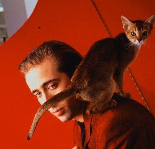 Коты и их знаменитости. Изображение № 5.