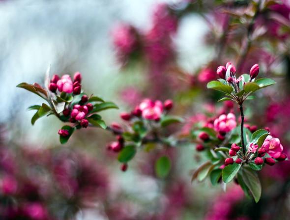 Весна идет! Создаем весеннее настроение. Изображение № 17.