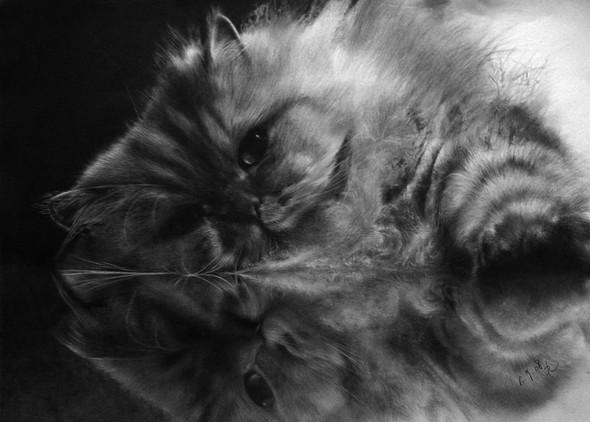 Кошки, люди, карандаш. Paul Lung. Изображение № 9.