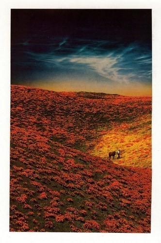 Изображение 13. Иллюстратор: Мэтт Шоу.. Изображение № 13.