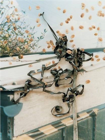 Фото-гербарий. Изображение № 23.
