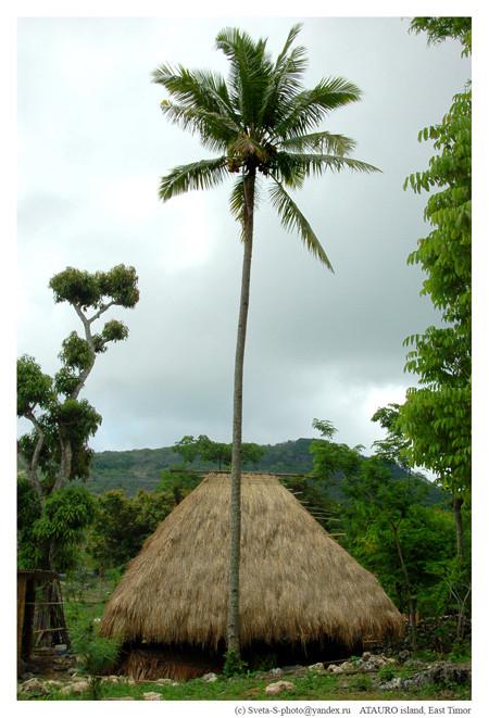Восточный Тимор. Изображение № 20.