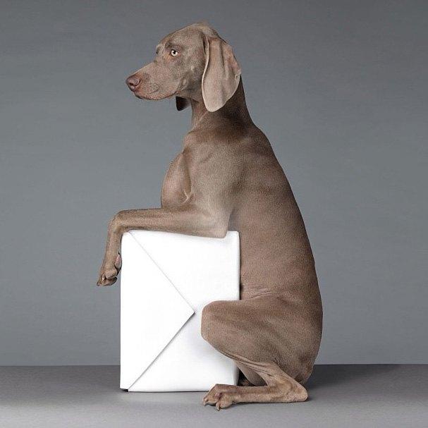 Acne одели собак в свою коллекцию. Изображение № 6.