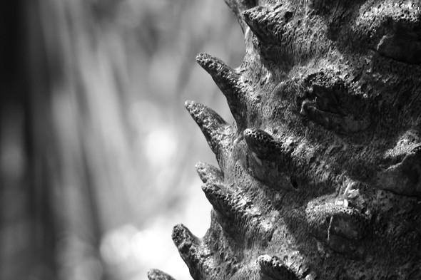 Наблюдая за пальмой. Изображение № 5.