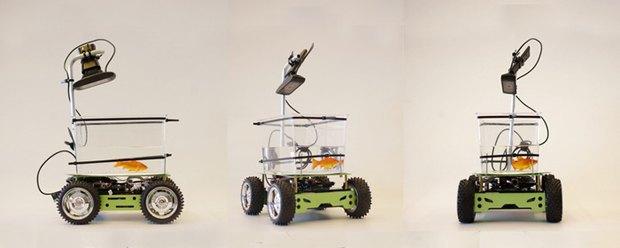 Рыбки смогут управлять роботизированным аквариумом. Изображение № 1.