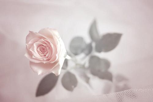 Изображение 3. Никогда не надо слушать, что говорят цветы. Надо просто смотреть на них и дышать их ароматом... Изображение № 3.