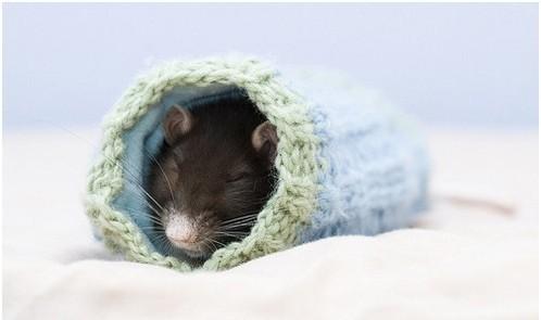 Фотосессия крысят отJessica Florence. Изображение № 11.